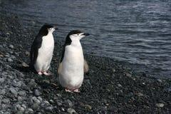 Pingouins en Antarctique Images stock