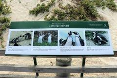 Pingouins ? la plage de rochers image libre de droits