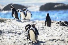 Pingouins ? la plage images libres de droits