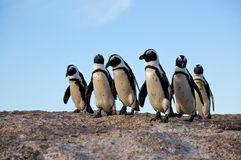 Pingouins restant sur une roche Image libre de droits
