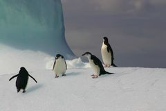 Pingouins sur l'iceberg Photographie stock libre de droits