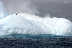 Pingouins sur l'iceberg Photo stock