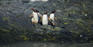 Pingouins sur le rivage Photo libre de droits
