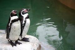 Pingouins sur une roche Photo libre de droits