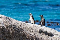 Pingouins sur une roche Photo stock