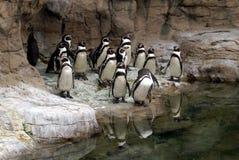 Pinguïn Royalty-vrije Stock Foto's