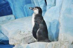 Pinguïn Stock Fotografie