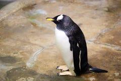 Pinguïn bij dierentuin stock fotografie