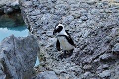 Pinguïn in de stad royalty-vrije stock foto