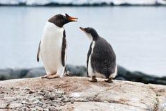 Pinguïn en kuiken royalty-vrije stock afbeeldingen
