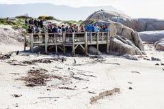 Pinguïn het bekijken platform Stock Fotografie