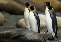 Pinguïn Maart Stock Foto