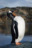 Pinguïn op de rots royalty-vrije stock afbeelding