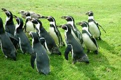 Pinguïnen royalty-vrije stock afbeelding