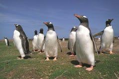 Pinguïnen Royalty-vrije Stock Fotografie