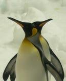 Pinguïnen Stock Afbeelding