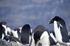 Pinguïnen in Antarctica stock fotografie