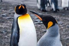 Pinguïnen in Antarctica royalty-vrije stock fotografie