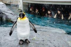 Pinguïnen bij Asahiyama-Dierentuin stock afbeelding