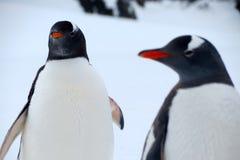 Pinguïnen en Vrienden Stock Foto's