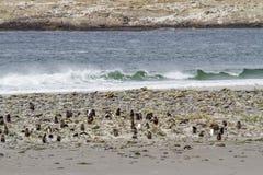 Pinguïnen - Magellan en Gentoo royalty-vrije stock afbeelding