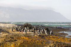 Pinguïnen op de rotsen Royalty-vrije Stock Foto's