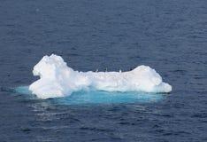 Pinguïnen op een ijsijsschol Stock Fotografie