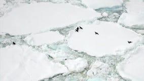Pinguïnen op ijsberg en ijsijsschol in oceaan van Antarctica stock footage