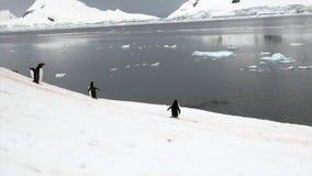 Pinguïnen op sneeuw rotsachtige kustijsberg en ijsijsschol in oceaan van Antarctica stock videobeelden