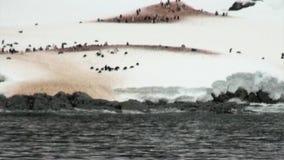 Pinguïnen op sneeuw rotsachtige kustijsberg en ijsijsschol in oceaan van Antarctica stock video