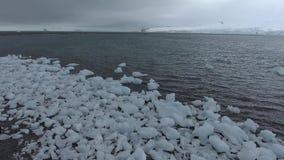 Pinguïnentribune op plakken van ijs en strand op de oever Andreev stock video