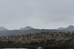 Pinguïnkolonie stock fotografie