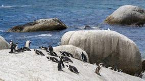 Pinguïnstrand, Zuid-Afrika Stock Afbeeldingen