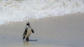 Pinguïnstrand, Zuid-Afrika Stock Foto