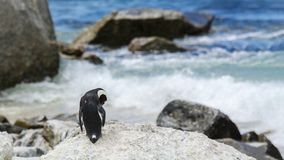 Pinguïnstrand, Zuid-Afrika Stock Foto's