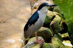 Pinguïnvogel royalty-vrije stock foto's