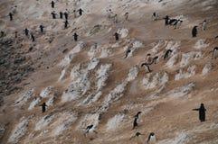Pinguïnweg op Paulet-Eiland stock foto
