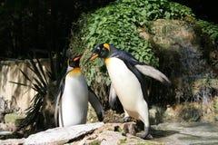Pinguim Foto de Stock