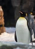 Pinguim Foto de Stock Royalty Free