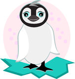 Pinguim branco novo no gelo Foto de Stock