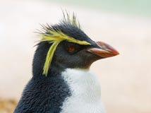 Pinguim com crista Imagem de Stock