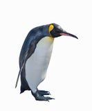 Pinguim de imperador isolado no fundo branco Foto de Stock Royalty Free