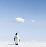 Pinguim de imperador no snowfield Foto de Stock