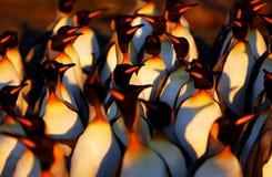 Pinguim de rei Imagens de Stock Royalty Free