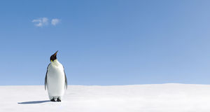 Pinguim em Continente antárctico fotos de stock