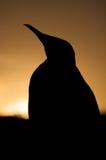 Pinguim na praia Fotografia de Stock Royalty Free