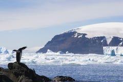 Pinguim no blefe de Brown, Continente antárctico de Adelie Fotografia de Stock Royalty Free