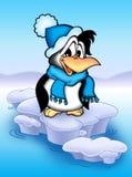 Pinguim no iceberg Foto de Stock