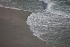 Pinguim que anda na praia Imagens de Stock