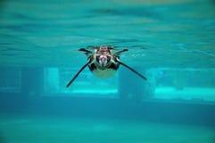 Pinguim subaquático Imagem de Stock Royalty Free